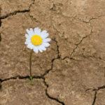 La resiliencia: ¿qué es y cómo podemos ejercitarla?